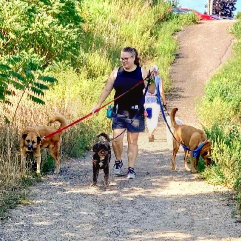 Kelly Crompton walking three dogs