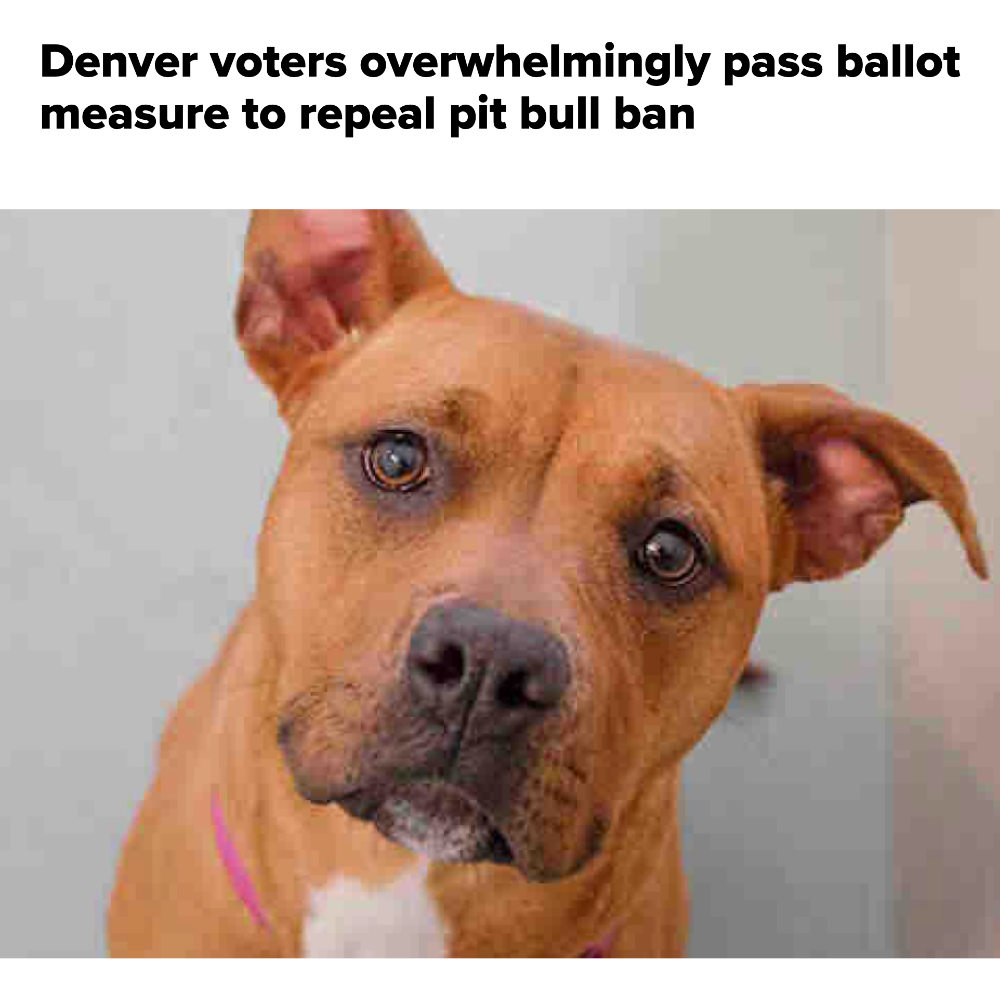 Great News for Pit Bull Lovers