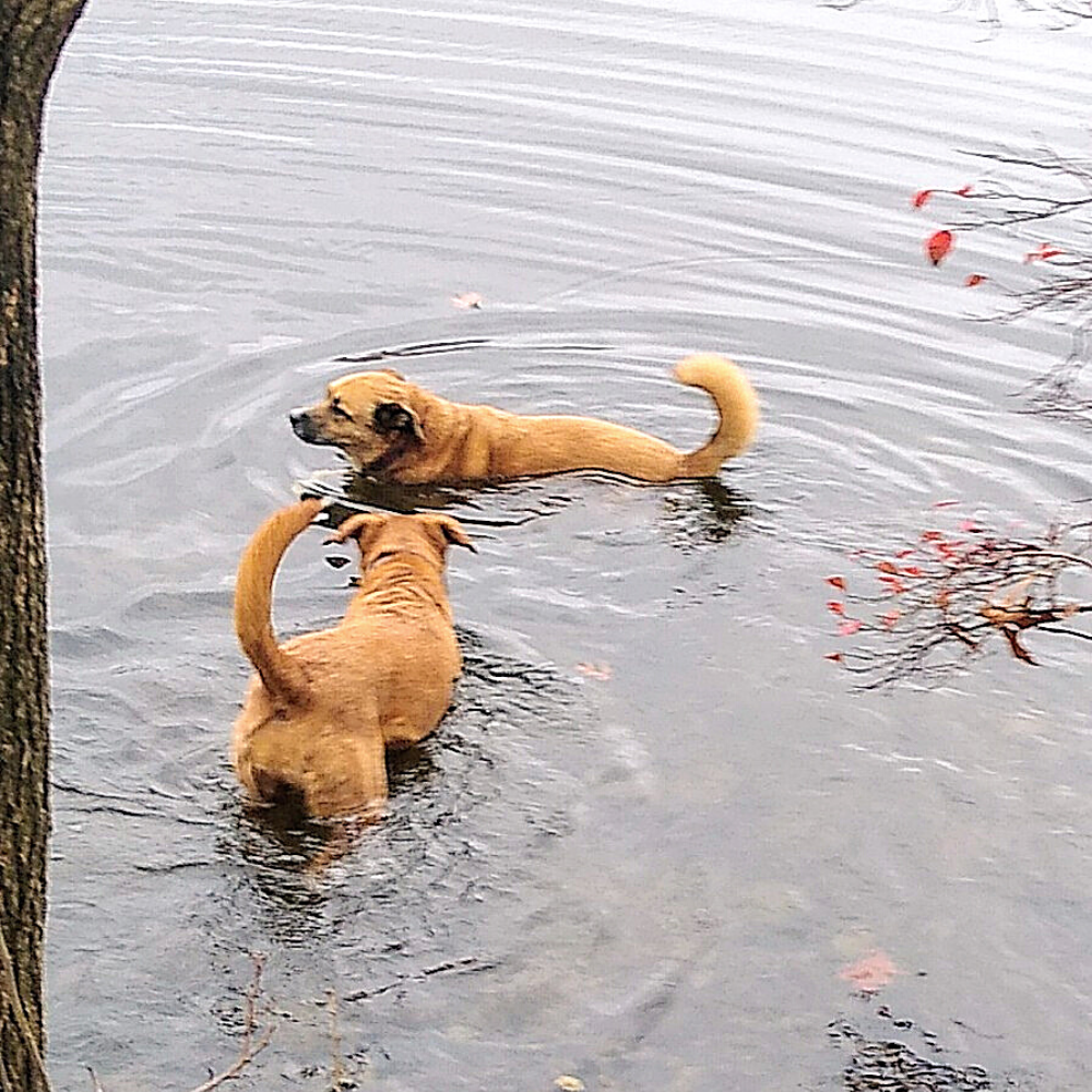 Jackson and Lillie Swimming