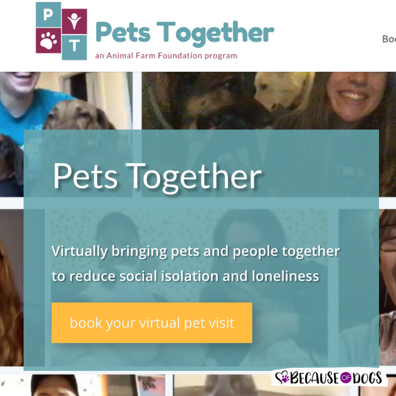 Pets Curing Isolation One Video Call at a Time