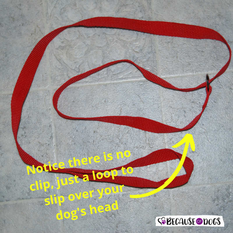Leash for Dog First Aid Kit