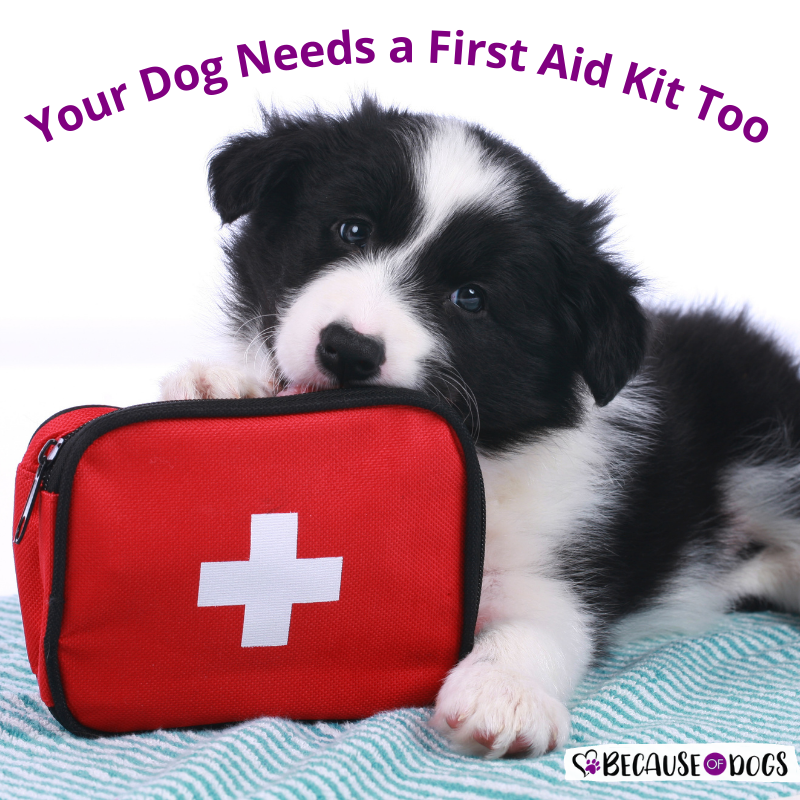 Your Dog Needs a First Aid Kit